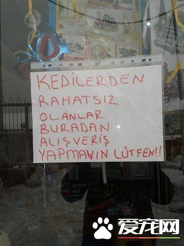 土耳其文具店开放让浪喵取暖 老板超暖男