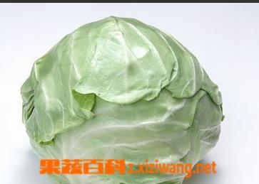 果蔬百科包菜的营养价值